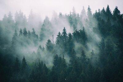 Plakat Misty krajobraz z lasu jodłowego w hipster zabytkowe stylu retro