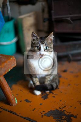 Plakat Młody kot w wnętrzu wsi