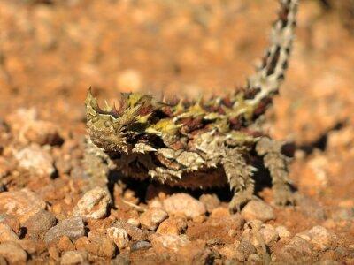 Plakat Moloch diabła, Australia
