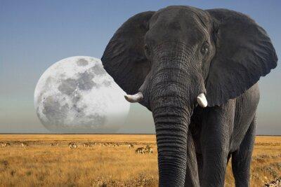 Plakat Moon wzrasta ponad przyrody w Parku Narodowym Etosha w Namibii
