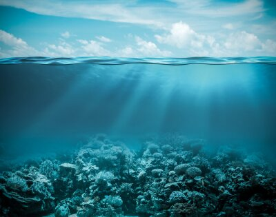 Plakat Morskiego lub oceanu podwodny głębokie tło natura