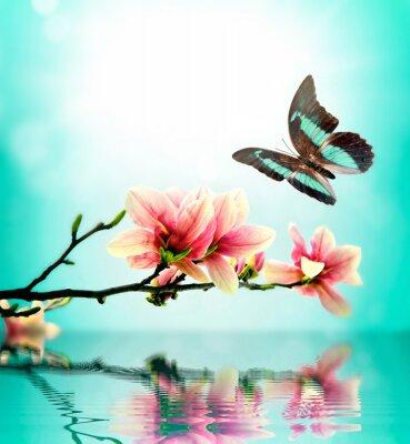 Plakat Motyl i kwiat magnolii