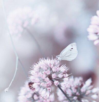 Plakat Motyl na cebula kwitnienia