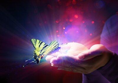 Plakat motyl w rękach - bajki i zaufanie