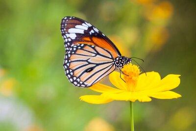 Plakat Motyle i Kwiaty