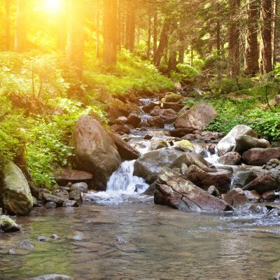 Plakat mountain river, forest and bright sun