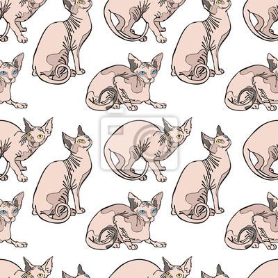 zdjęcia nagich kotów darmowe xxx sexy videos.com