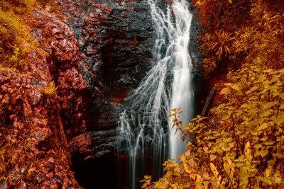 Plakat Natural Bridge Wodospad w Springbrook w Queensland z czerwonymi liśćmi.