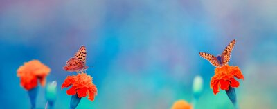 Plakat natural panoramic background with two bright orange butterflies they sit on flowers in soft colors