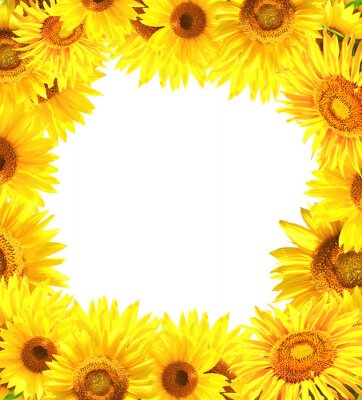 Plakat Nature frame with sunflowers