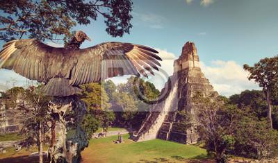 Neophron patrząc na starożytnych ruin miasta Majów Tikal