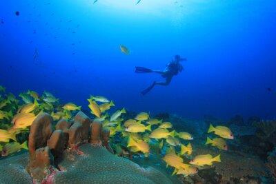 Plakat Nurkowanie w oceanie