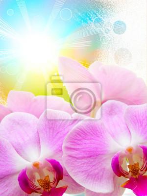 Plakat Orchid kwiat bliska