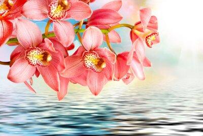 Plakat Orchid kwiat z bliska
