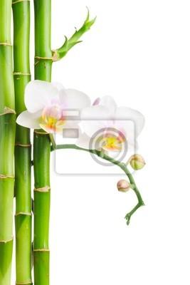 Plakat orchidea