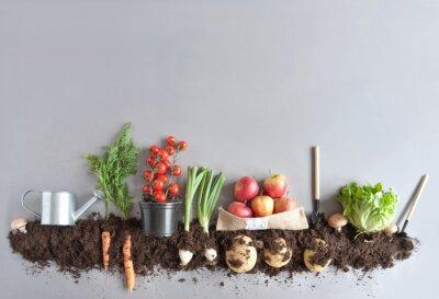 Plakat Organicznie owocowy i vegtable ogrodowy tło