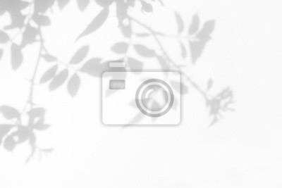 Plakat Overlay effect for photo. Gray shadow of the wild roses leaves on a white wall. Abstract neutral nature concept blurred background. Space for text.