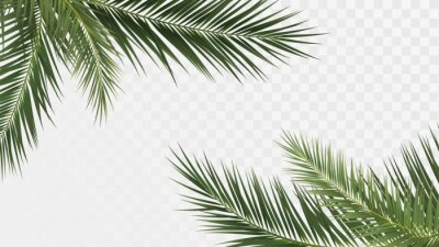 Plakat Palm branches in the corners, tropical plants decoration elements