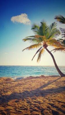 Plakat Palmy na tropikalnej wyspie