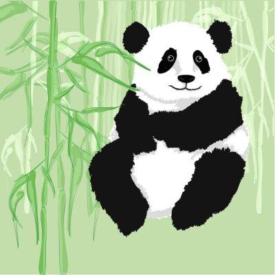 Plakat Panda siedzi z bambusa lasu w tle.