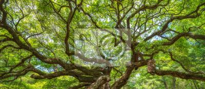 Plakat Panorama oddziałów z Angel Oak Tree
