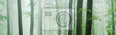 Plakat Panorama of Beech and Oak Forest in Thick Fog