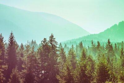 Plakat panoramiczny obraz tajemniczy zielony mglisty mgła sosnowego lasu i gór