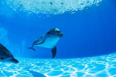 Plakat Para delfinów