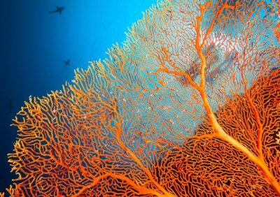 Plakat Para nurków na rafy koralowej