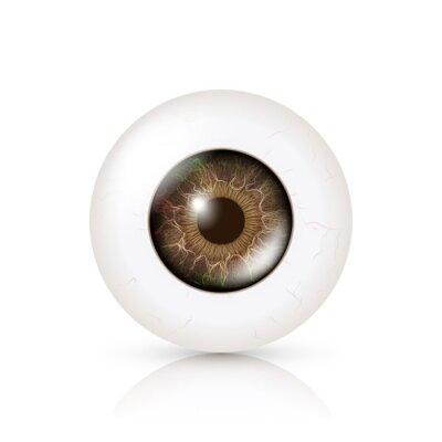 Photo Realistic gałki ocznej. Retina Ludzki. Ilustracji wektorowych 3D Human Eye błyszczący z cienia i refleksji. Przedni widok. Wyizolowanych na białym tle