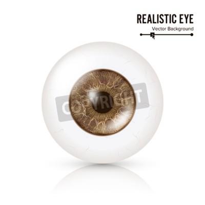 Photo Realistyczna gałka oczna. Ludzka siatkówka. Ilustracja wektorowa 3d ludzkiego oka błyszczące z cienia i refleksji. Przedni widok. Pojedynczo na białym tle