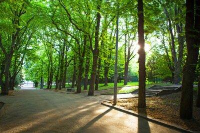 Plakat piękna aleja w parku