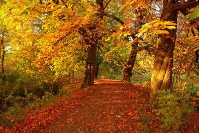 Plakat Piękna jesień w parku