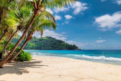 Plakat Piękna plaża z palmami i turkusowym morzem na Jamajce.