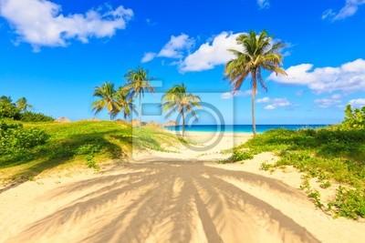 Plakat Piękna tropikalna plaża Varadero na Kubie
