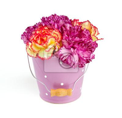Plakat piękne kwiaty goździków