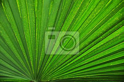 Plakat Piękne liści tekstury