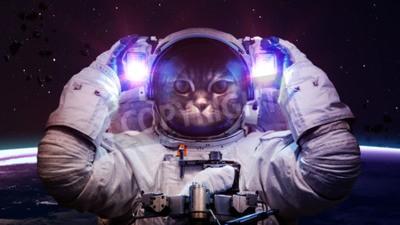 Plakat Piękny kot w kosmosie.