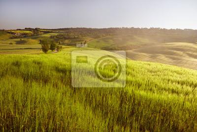 Piękny krajobraz Toskanii z pola kwiatów w Val d'Orcia