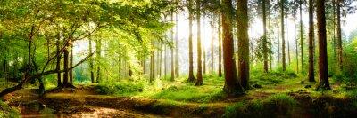 Plakat Piękny las na wiosnę z jasnym słońce świeci przez drzewa