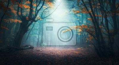 Plakat Piękny mistyczny las w błękitnej mgle w jesieni. Kolorowy krajobraz z zaczarowanymi drzewami z pomarańczowymi i czerwonymi liśćmi. Sceneria z ścieżką w marzycielskim mgłowym lesie. Kolory jesieni w pa