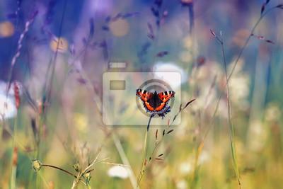 Plakat piękny motley pomarańczowy motyl siedzi na kwitnące lato łąka w słoneczny dzień