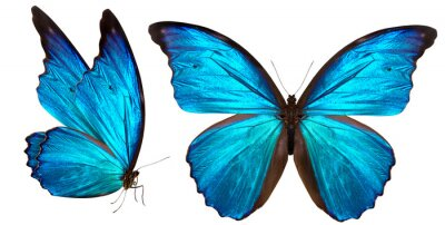 Plakat piękny motyl na białym