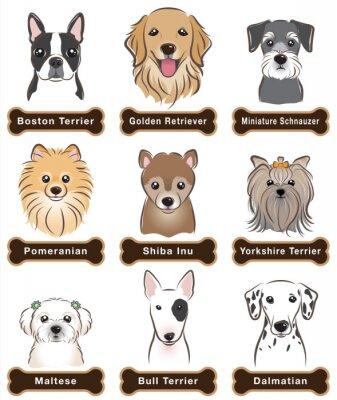 Plakat Pies / Tabliczka znamionowa