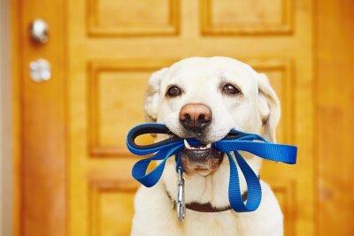Plakat Pies z smyczy