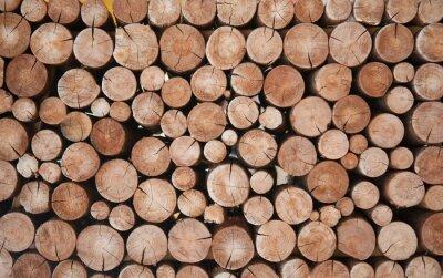 Plakat Pile of wood logs stumps for winter