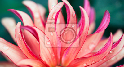 Plakat Pink Flower Macro