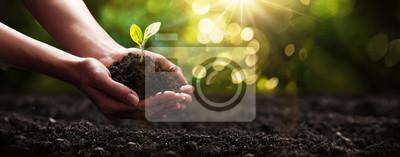 Plakat Plant in Hands. Pojęcie ekologii. Tło natury