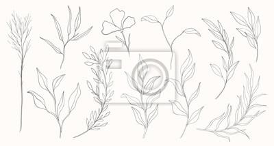 Plakat Plant nature hand drawn set. Collection botanical element.Elegante vintage style.