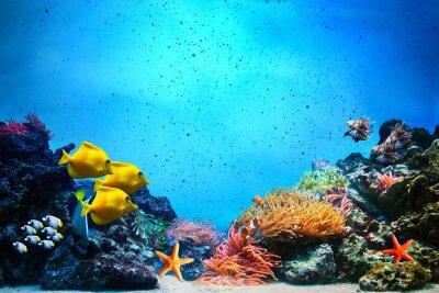 Plakat Podwodne sceny. Rafa koralowa, grupy ryby w jasnych wody oceanu